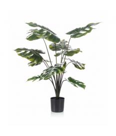 Planta MONSTERA de 60 cm