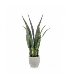 Planta SANSEVERIA de 65 cm