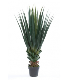 Planta Agave PANDORA