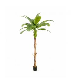 Árbol Platanero de 215 cm