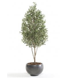 Árbol OLIVO MINI de 175 cm