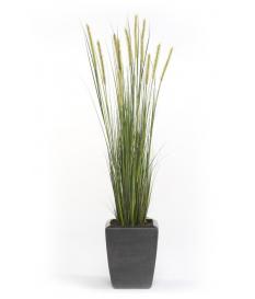 Planta Junco ESPIGA ESTRECHA de 125 cm