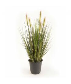 Planta de Hierba Verde