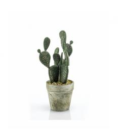 Cactus PLANO
